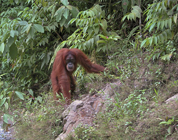 Indonesia, Gunung Leuser National Park