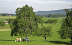 E1, Trungen, Switzerland
