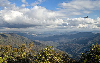 Barrington Tops Trek - by Gianni PK