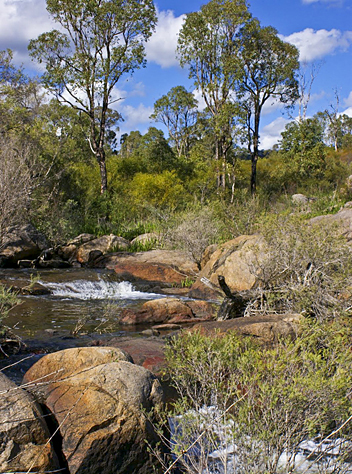 Railway Reserve Heritage Trail: John Forest NP - by Jorien