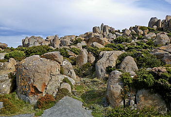 Tasmanian Trail - by Joerg966